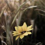 Yellow wild flower